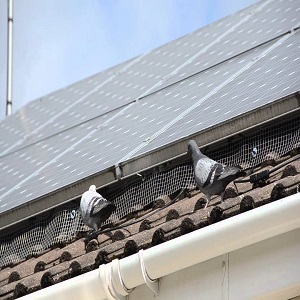 How to get Rid of Birds Under Solar Panel